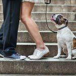Tips para fotos de mascotas (12)