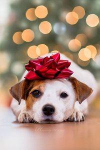 Tips para fotos de mascotas (14)