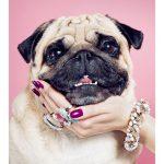 Tips para fotos de mascotas (15)
