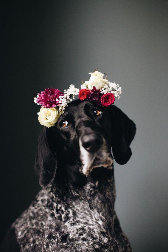 Tips para fotos de mascotas (16)