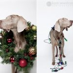 Tips para fotos de mascotas (18)