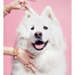 Tips para fotos de mascotas (2)