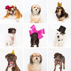 Tips para fotos de mascotas (21)
