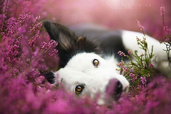 Tips para fotos de mascotas (22)