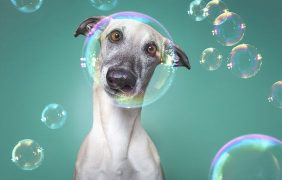 Tips para fotos de mascotas