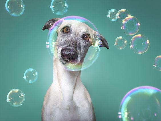 Tips para fotos de mascotas (8)