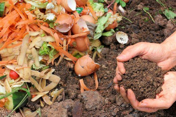 como alimentar las plantas (2)