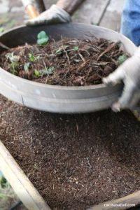 como alimentar las plantas (3)