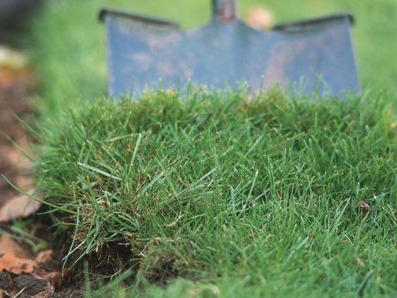 Ideas para cuidar tu jard n - Como plantar cesped en el jardin ...
