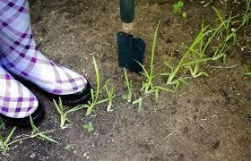 como cuidar el cesped del jardin
