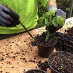 como mantener un jardin (1)