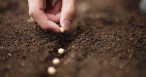 como plantar flores sobre la tierra (1)