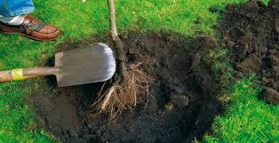 como plantar flores sobre la tierra (2)