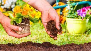 como plantar flores sobre la tierra (4)