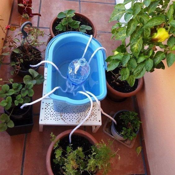 como regar plantas (3)