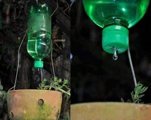 como regar plantas (4)