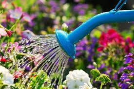 como regar plantas