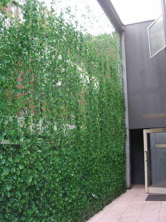 bardas con jardin vertical 4