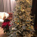 ideas para decorar una casa pequena en navidad (2)
