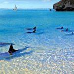 playa balandra la paz mexico