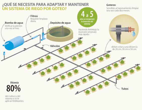 Riego por goteo casero c mo instalarlo en el jard n for Sistema de riego por aspersion para jardin