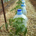 Tipos de riego por goteo para jardín3