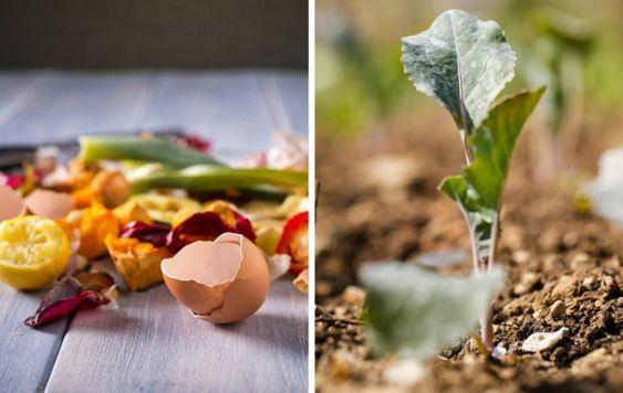 ventajas de la composta casera