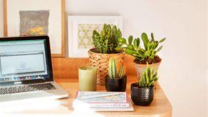 Plantas para interiores que no se te morirán fácilmente: planta de jade