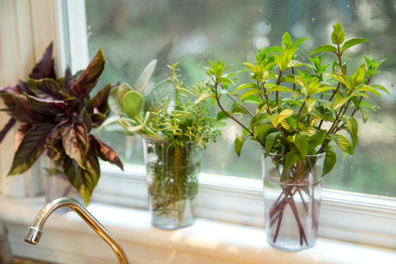 11 hierbas aromáticas para cultivar en agua todo el año