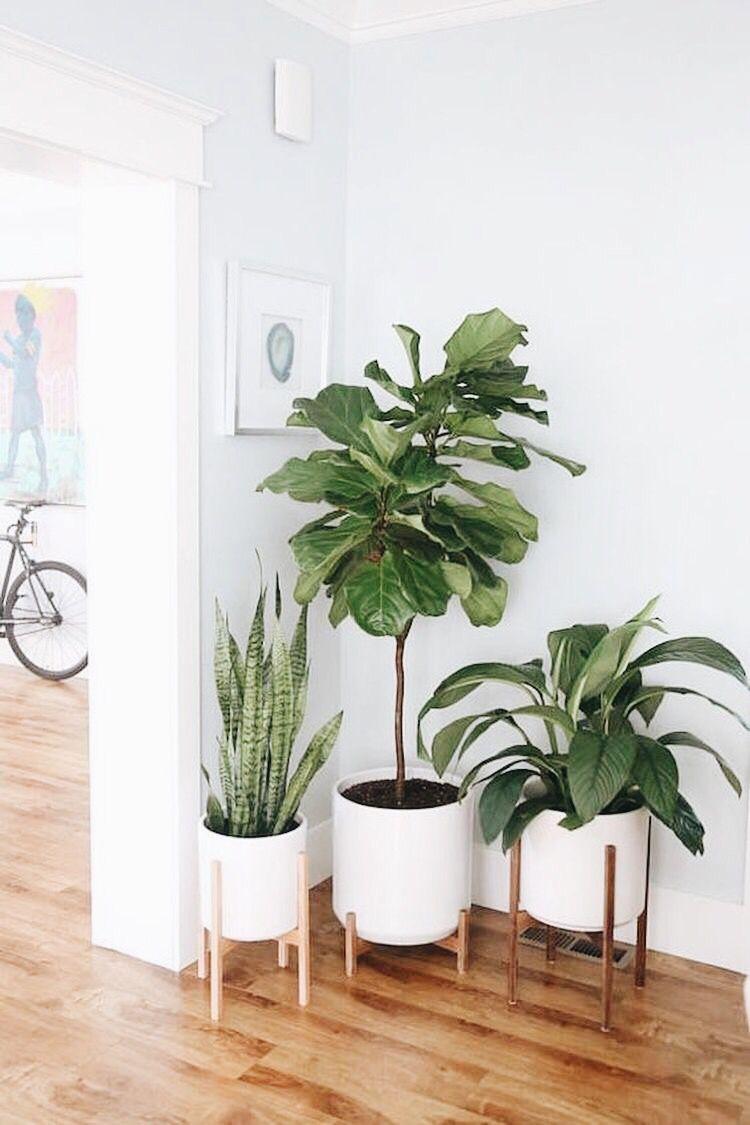 Usa plantas para tu hogar