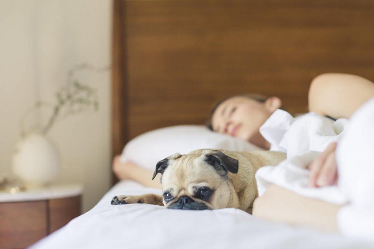 No olvides elegir una buena almohada