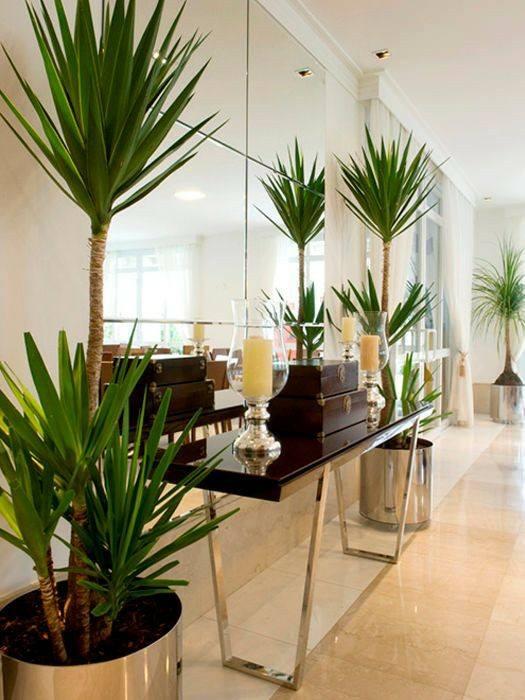 Plantas en recibidores