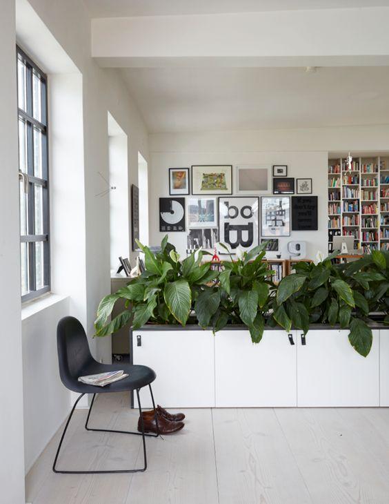 Diseños de jardines para interiores en estudio