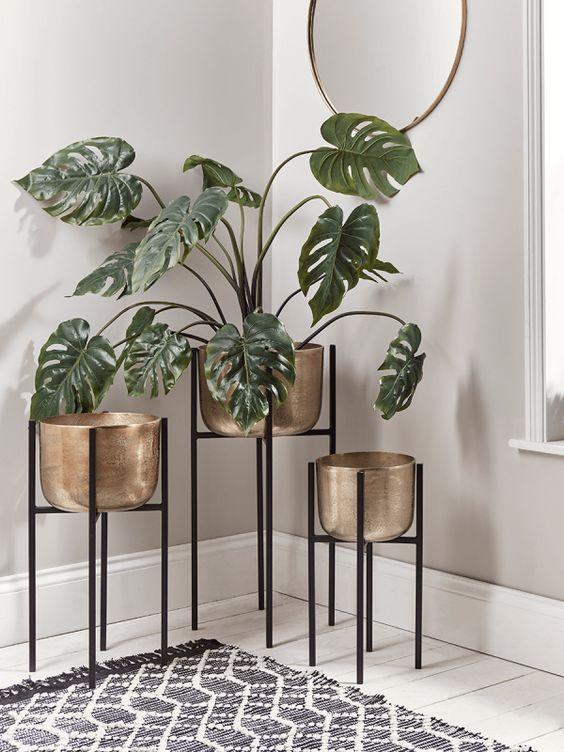 Plantas para interior más resistentes y bonitas planta Monstera