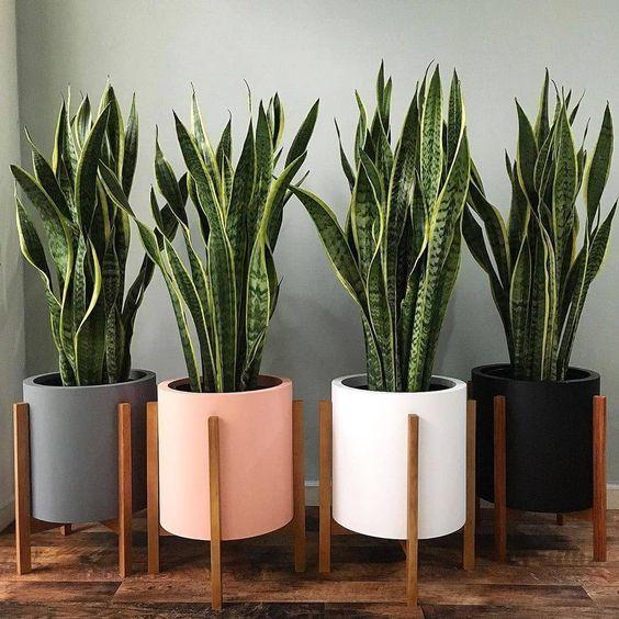 Plantas para interior más resistentes y bonitas planta Serpiente