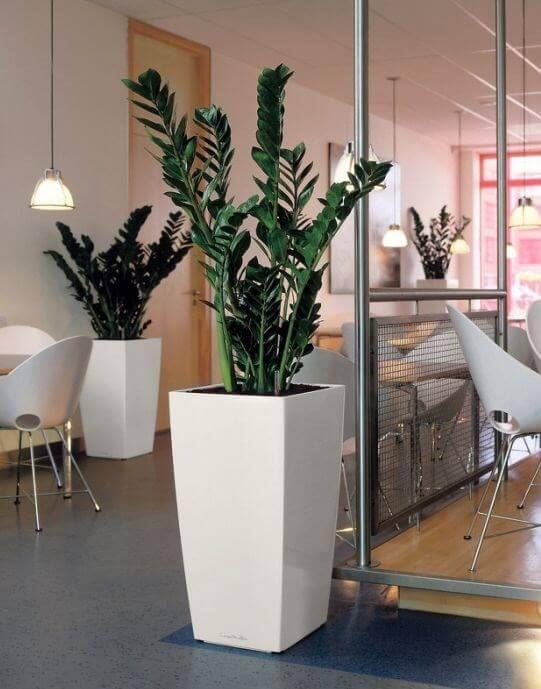 Plantas para interior más resistentes y bonitas planta ZZ