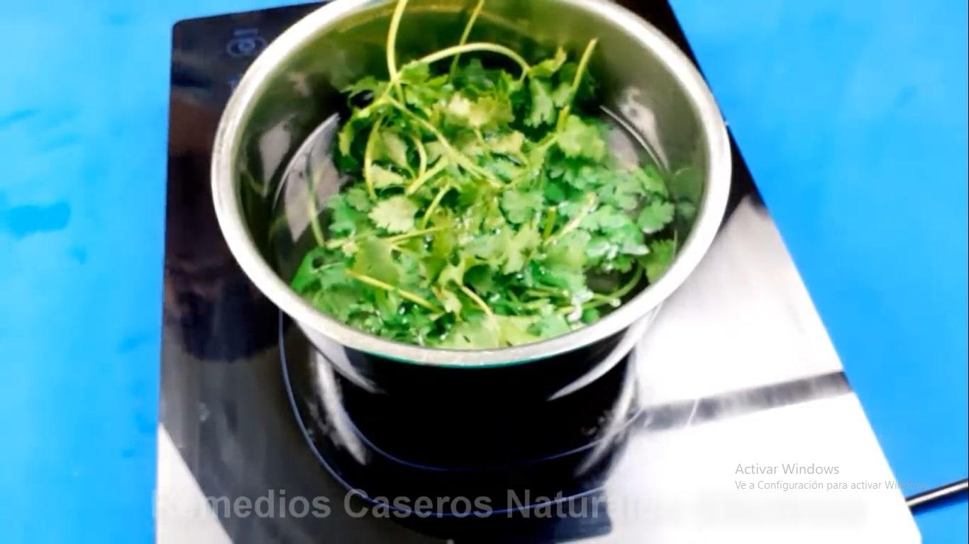Infusión de cilantro para bebida natural
