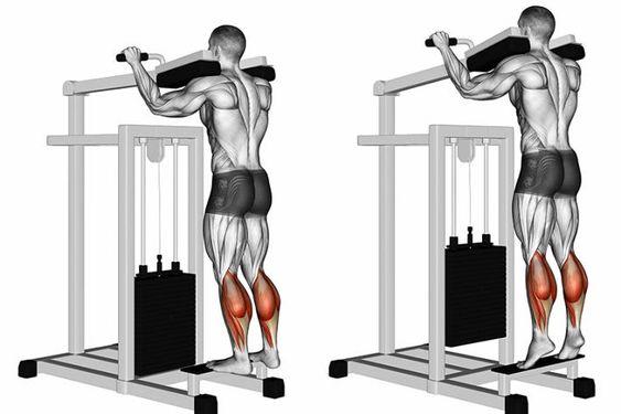 Los 5 mejores ejercicios para aumentar piernas rápidamente extensión de pantorrillas