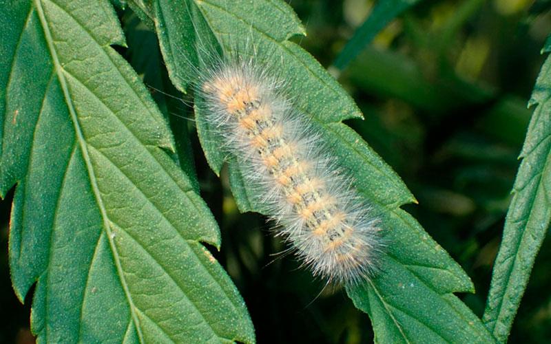 Como prevenir las orugas en nuestras plantas