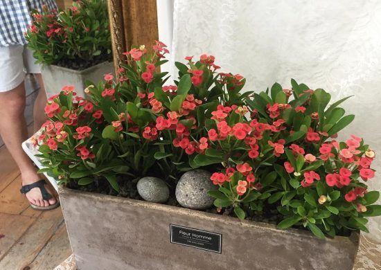 Iluminación ideal para la planta corona de cristo