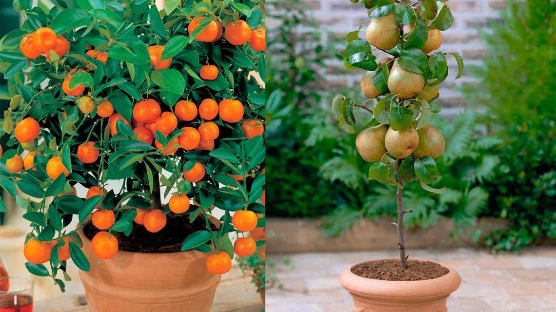 Jardines frutales para casas pequeñas