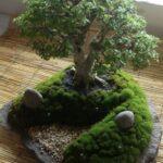 Jardines miniatura japoneses