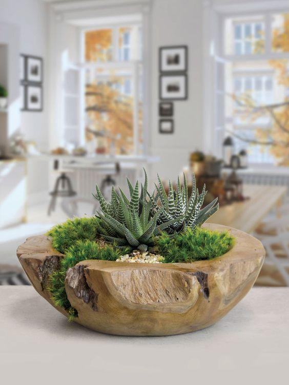 Jardines miniatura para interiores