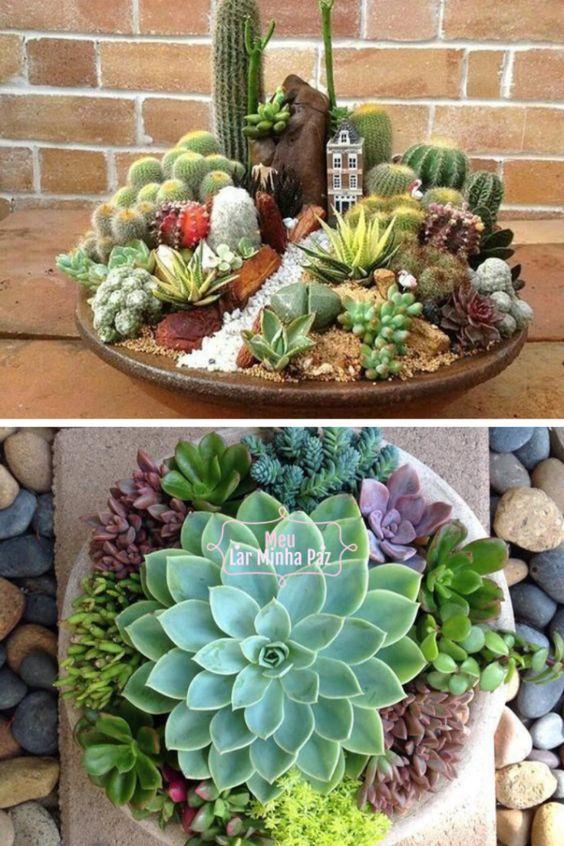 Jardines miniatura de suculentas
